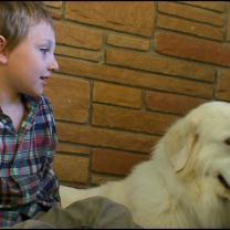 For $10K, Families Feel Cheated By 'Trained' Service Dogs