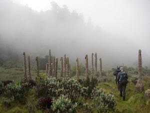 Mountain climbers visit the Rwenzori mountain range …