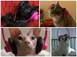 A hilarious video of cats rocking out to Gangnam Style