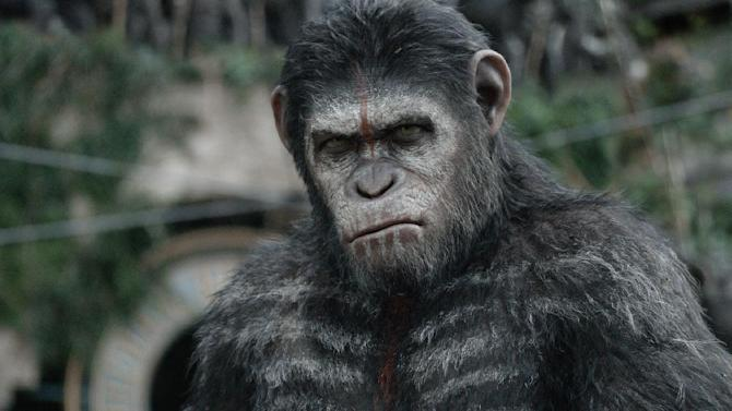 """This photo released by Twentieth Century Fox Film Corporation shows Andy Serkis as Caesar in a scene from the film, """"Dawn of the Planet of the Apes."""" Hollywood stuntman Terry Notary plays more than 100 primates in the film, and also taught the film's stars and stuntmen how to find their simian side. (AP Photo/Twentieth Century Fox Film Corporation)"""