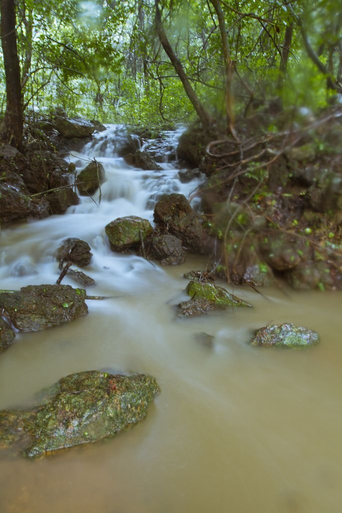 Stream in Agumbe