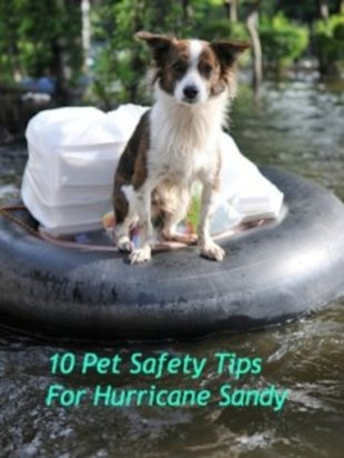 Pets need protection from Hurricane Sandy just as we do: follow these pet safety tips.
