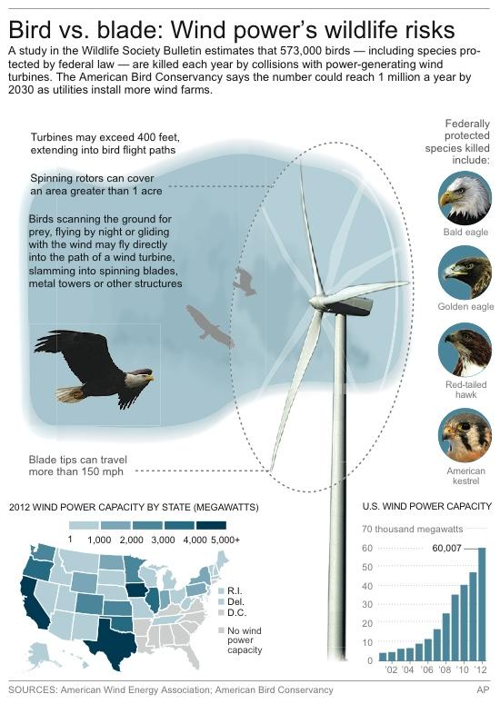 Graphic shows how birds are harmed by wind turbines