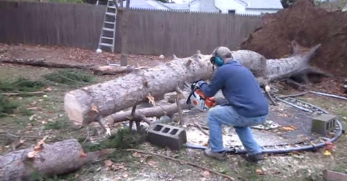 Tree Removal Has Hilarious Ending