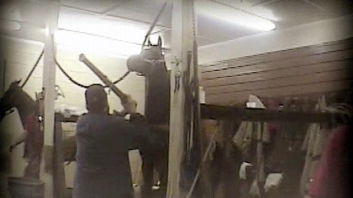 Horse Trainer Pleads Guilty to Animal Abuse