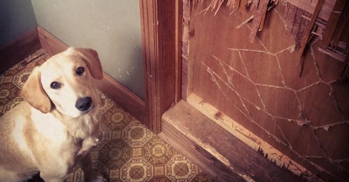 20 Dogs That Got Caught Red-Pawed