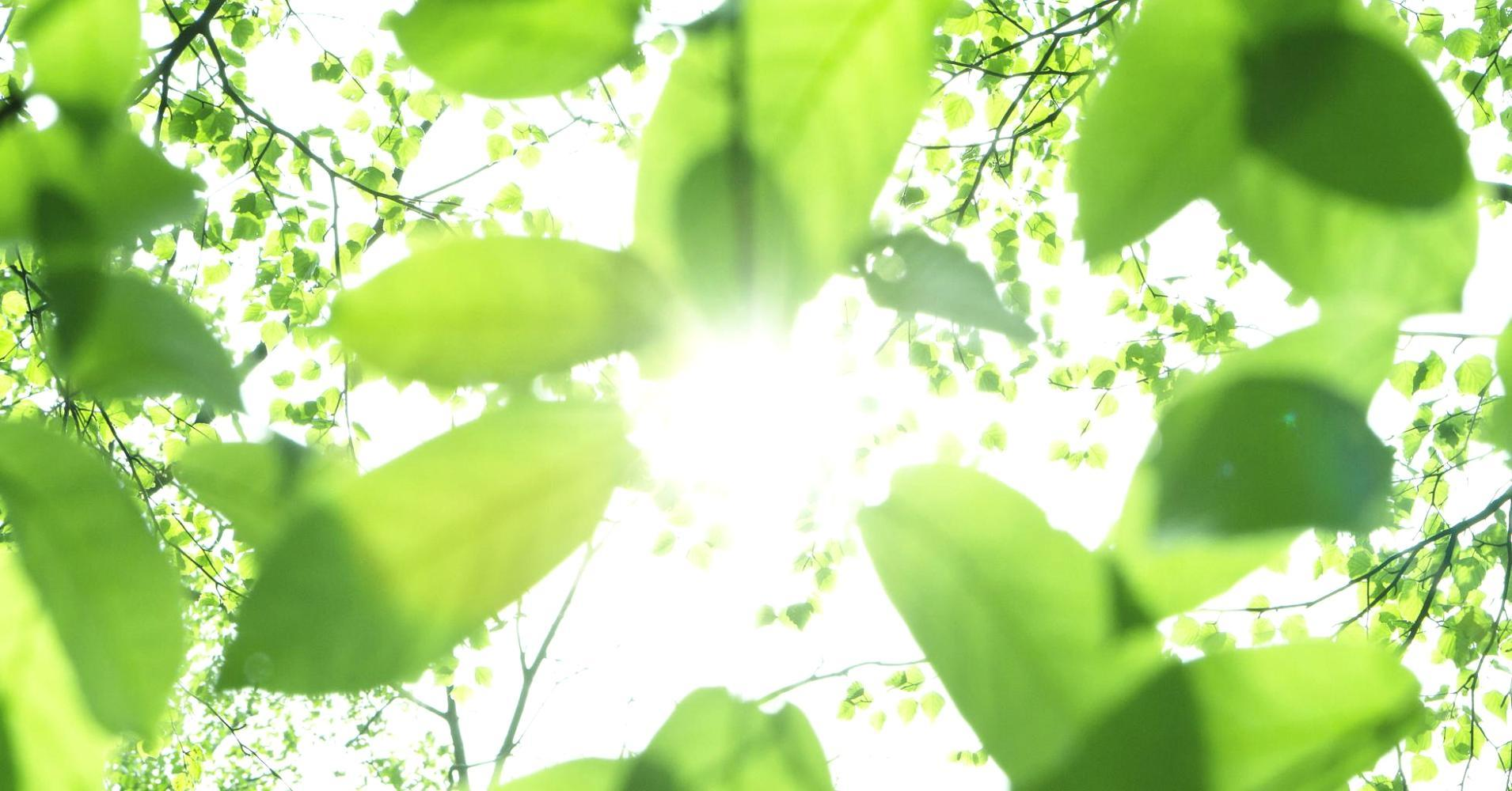 Power plant: High-tech photosynthesis