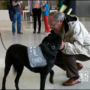 'Wag Brigade' Therapy Dogs Bring Affection To SFO Holiday Travelers