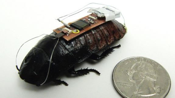 Cyborg Cockroaches May Be Future Emergency Responders