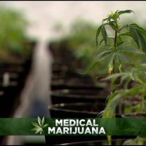 Bill To Legalize Medical Marijuana May Be Dead