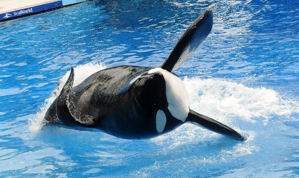 SeaWorld, activists clash on social media over orcas' lot