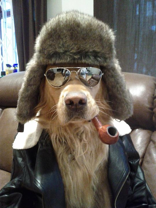 Coolest Dog Ever