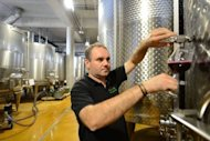"Mihai Banita, co-owner of Lacerta winery, prepares to taste a new wine in Dealu Mare. ""We are not only making the umpteenth quality Merlot,"" he explains. ""We have our own Feteasca Neagra"" -- a red -- ""and its dried-prune aroma. (Also) Feteasca Alba or Tamaioasa,"" two white varieties"