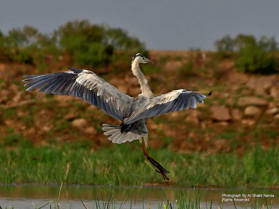 Travel Mangalajodi Orissa Odisha Bird Watching Photography Flickr