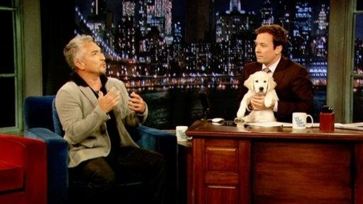 Cesar Millan, Part 1