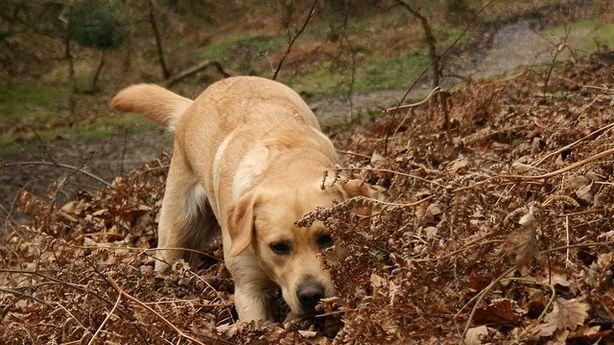Science Wants More Dogs That Can Smell Low Blood Sugar in Diabetics