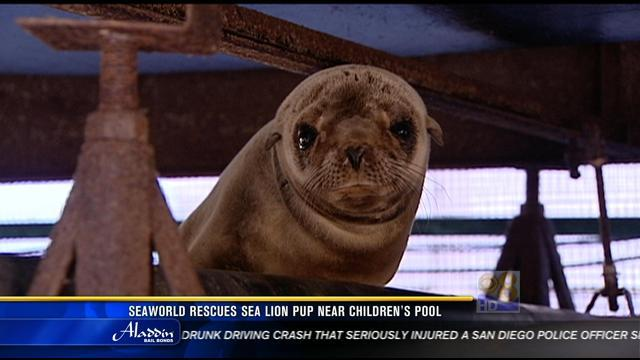 SeaWorld rescues sea lion pup near Children's Pool