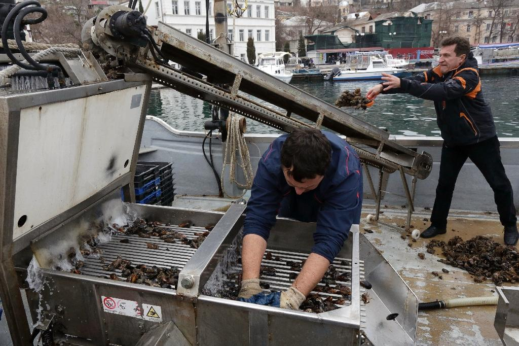 Crimean oysters aim for Russian palates under embargo
