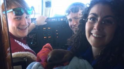 This Sloth Got His Own Private Jet to Fly to New Home