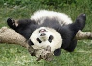 How to Recover From the Ravages of Google Penguin and Panda image intree 300x214