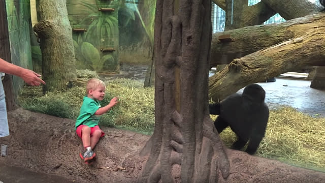 This 2-Year-Old Playing Hide-and-Seek With a Gorilla Is Your Daily Dose of Adorableness