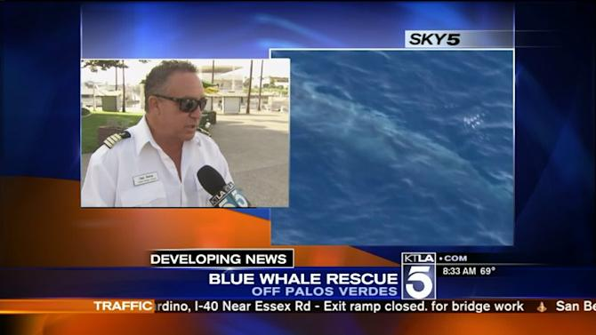 Rescue Efforts to Free Entangled Blue Whale in Waters Off San Pedro Coast to Resume