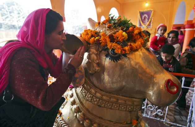 File photo of a Hindu devotee whispering her wishes in the ear of Nandi inside a temple during the Mahashivratri festival in Jammu