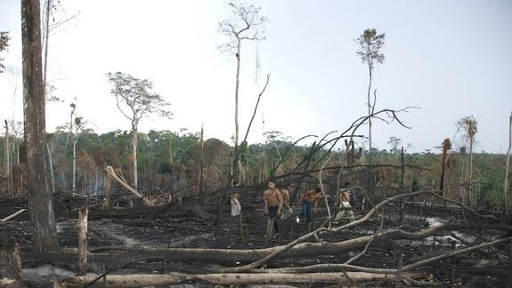 Forest Loss and Climate: Empowering Communities Can Help (Op-Ed)