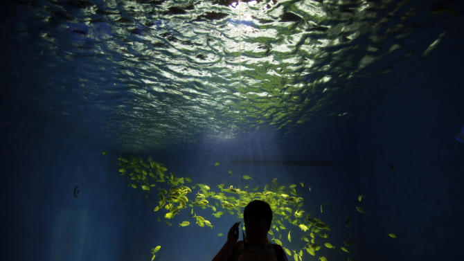 FILE - In this July 19, 2013 file photo, a visitor makes a phone call with his mobile phone as he looks at a school of golden trevally displayed at an aquarium in Shanghai, China. A study released Thursday, July 3, 2014 by the journal Science, which involved college students who left their cellphones and other distractions behind to be alone to think for six to 15 minutes, found that many of them reported it wasn't very fun. (AP Photo/Eugene Hoshiko, File)