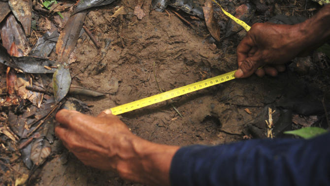 In this undated photo released by the WWF-Indonesia, a scientist measures a footprint which is believed to be of a Sumatran rhino in a forest in Kutai Barat, East Kalimantan province, Indonesia. The WWF-Indonesia said that they have discovered several footprints believed to be from the critically endangered species on Indonesia's Borneo island. (AP Photo/WWF-Indonesia) NO ARCHIVE, NO SALES