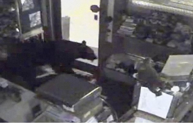 This image provided by Rocky Mountain Chocolate Factory taken from surveillance video shows a bear leaving the Rocky Mountain Chocolate Factory store in Estes Park, Colo., on July 25, 2012.  The black