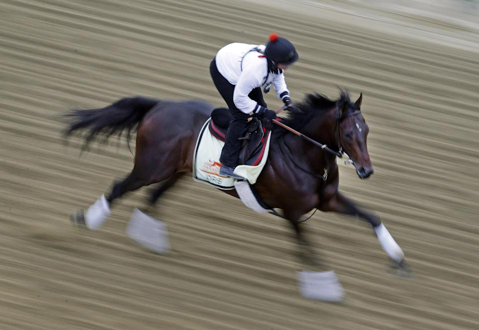 Kentucky Derby winner Orb, with exercise rider Jennifer Patterson aboard, gallops during a workout at Pimlico Race Course in Baltimore, Thursday, May 16, 2013. The Preakness Stakes horse race is scheduled to take place May 18. (AP Photo/Patrick Semansky)
