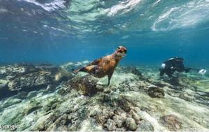 Visit the Galapagos Islands on Google Street View