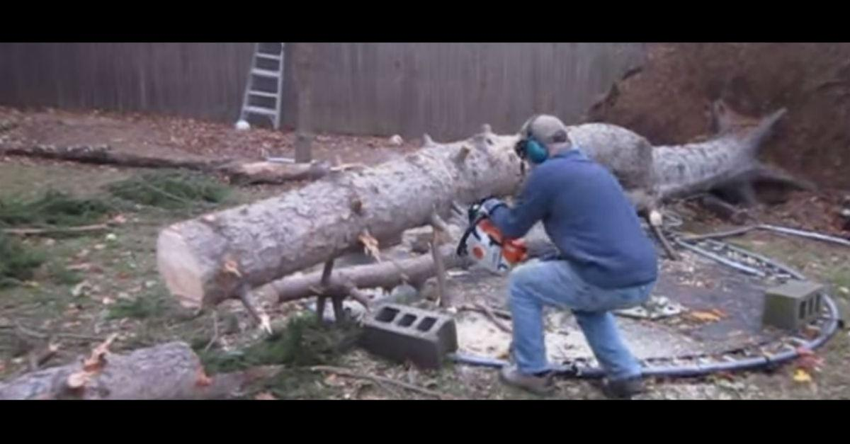 Tree Fights Back (And Wins)