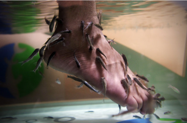 An Iraqi man immerses his feet in a fish tank with Garra rufa, also known as Doctor fish at Baghdad's first fish pedicure salon in Iraq, Sunday, June 10, 2012. The latest luxury spa in Iraq's capital