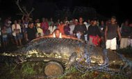 Giant One-Ton Crocodile Enters Record Books