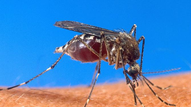 Cases of dengue have soared in Brazil where the disease has caused 229 fatalities this year, the Health Ministry said Monday, as authorities try to combat its spread using transgenic mosquitos