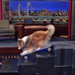 David Letterman - Stupid Pet Tricks: Skateboarding Dog