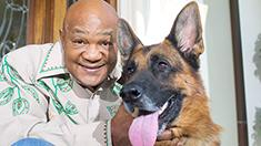 George Foreman: I have 18 German Shepherds at my house