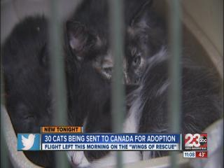 30 Cats sent to Canada for adoption
