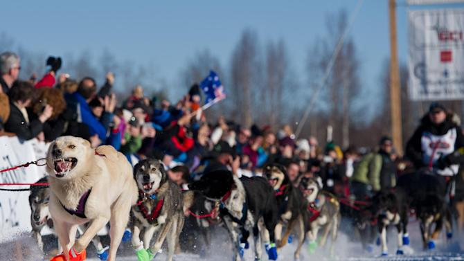 Dogs in Curt Perano's team leave the starting line of the Iditarod Trail Sled Dog Race on Sunday, March 2, 2014, in Willow, Alaska. (AP Photo/Anchorage Daily News, Marc Lester)