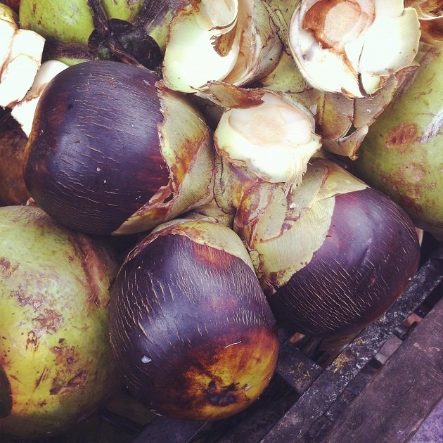 Sea coconut didn&#x2019;t come from the sea&#x2026;