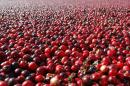 FILE - This Thursday Oct. 11, 2012 photo shows cranberries in a field in South Haven, Mich. In a study published Thursday, Oct. 27, 2016 in the Journal of the American Medical Association, cranberry capsules didn't prevent or cure urinary infections in nursing home residents. The research adds to decades of conflicting evidence on whether cranberries in any form can prevent extremely common bacterial infections. (Mark Bugnaski/Kalamazoo Gazette - MLive Media Group via AP)