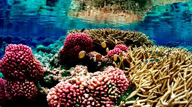 How to Save Coral Reefs from Climate Change: Genetic Manipulation