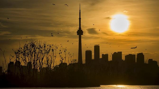 The sun sets behind the skyline as Double Crested Cormorants birds nest in a tree at Tommy Thompson Park as a plane lands at the Toronto Island Airport in Toronto