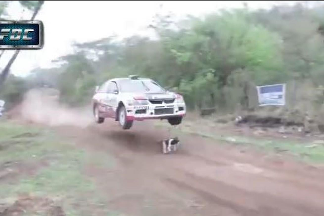 Luckiest dog in the world just keeps running after rally car jumps over it