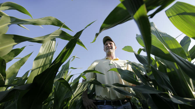 """In this Tuesday, June 19, 2012 photo, Matt Danner stands among stalks of corn in a field on his farm near Templeton, Iowa. Danner, part of a five-generation farm family that has worked the same land in this area for more than 120 years, says he still recalls watching grown men cry at farm sales. At 33, he says this probably is the best time to farm he's seen in 15 years. """"It takes 10 good years to fix the five bad ones of the '80s,"""" he says. """"It's going to go the other way. It always does. There's plenty of history to prove it's not going to last long."""" (AP Photo/Charlie Neibergall)"""