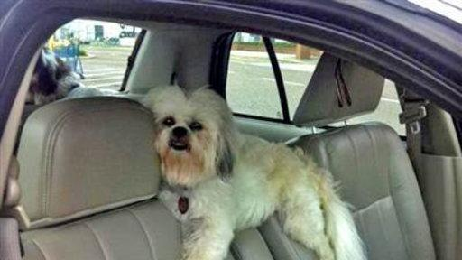 Shotgun! in Viewer Photo, Pup Gets Comfy in Car