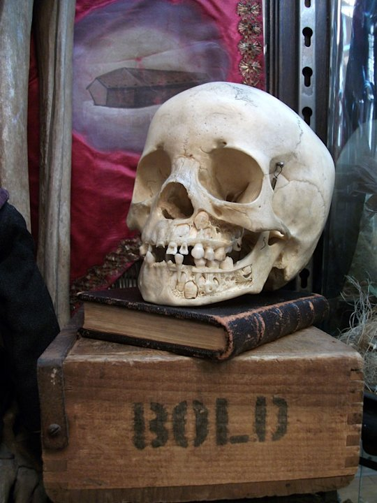 Skull as seen on &quot;Oddities.&quot; 