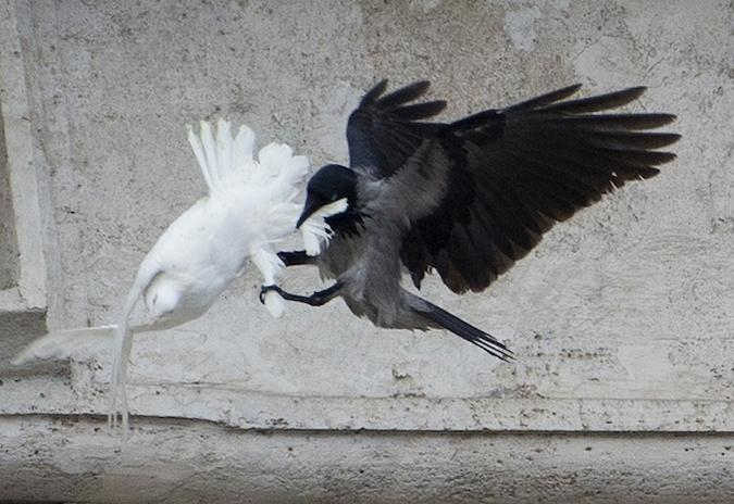 Birds attack peace doves freed from pope's window